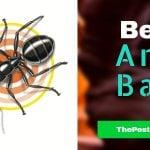 Best Ant Bait