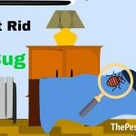 Best Way To Get Rid Of Bed Bugs Forever