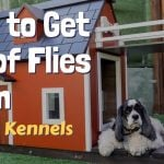 How to Get Rid of Flies From Dog Kennels