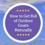 How to Get Rid of Outdoor Gnats Naturally