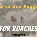 How to Use Foggers For Roaches