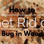 How to get rid of bug in wood
