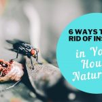 6 Ways to Get Rid of Insects in Your House Naturally