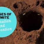 Causes of Termite Infestation and Prevention