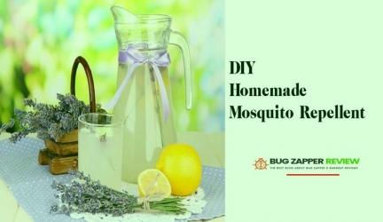 Best Blog About Pest Control & Garden Reviews